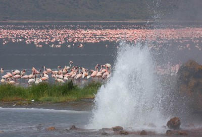 19 companies bidding for 800 MW development at Bogoria-Silali in Kenya