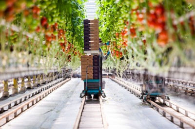 Geothermal heating in an Idaho farm has changed the way food is grown