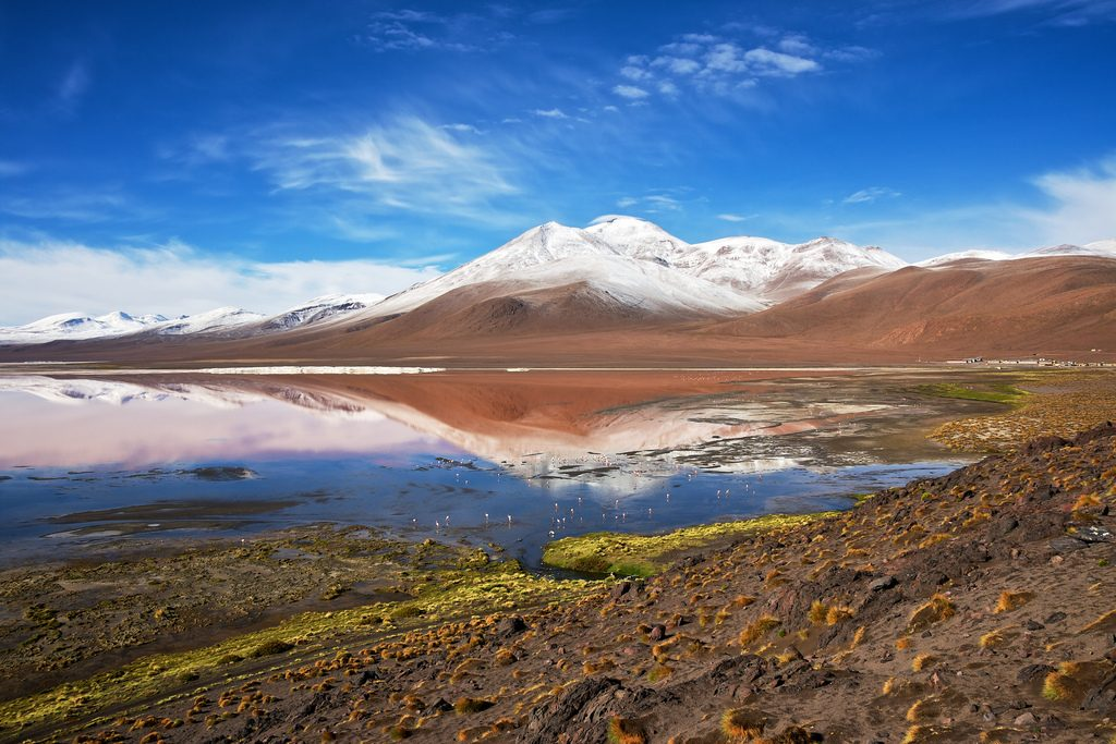 two international consortia with bids for 5 mw laguna colorada