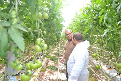 Tunisia increasing output and export of geothermally grown tomatoes to European and Gulf countries