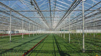 New loan product announced for greenhouse development in Turkey