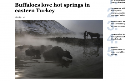 Fleeing freezy winter buffaloes bath in hot springs in Eastern Turkey