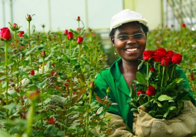 Kenyan greenhouse operator Oserian wins Int'l Grower of the Year Award