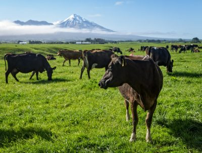 New Zealand's second geothermal dairy plant nearing completion