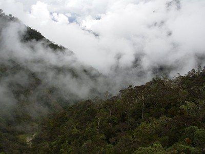 Indonesia's protected forest open for power development