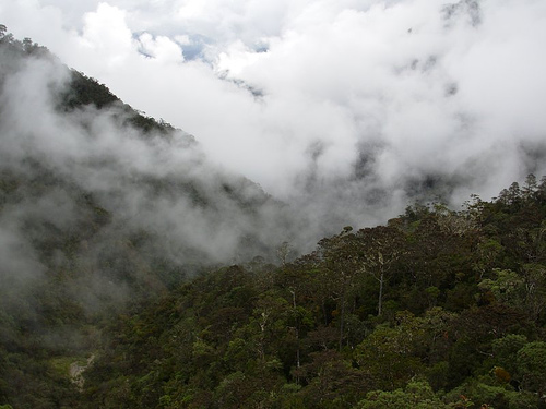 Indonesia's forest moratorium won't apply to geothermal projects