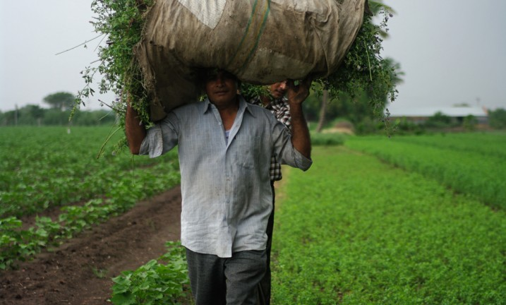 Farm worker in Gujarat, India (source: flickr/ Emmanuel Dyan, creative commons)