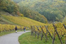 Wineyards_Alsace_France