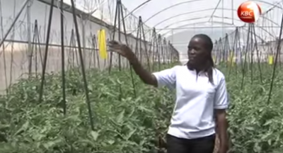 Video report from the opening of the GDC direct use pilot project, Kenya