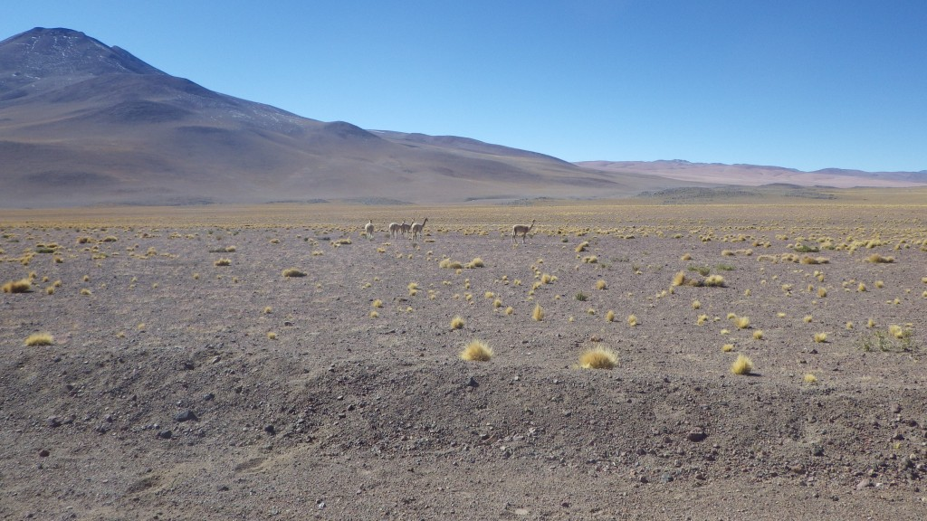 Italian Prime Minister to set first stone of Cerro Pabellon project on visit to Chile