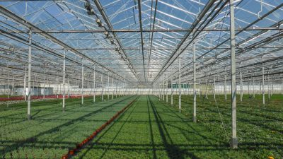 Geothermal Heat to Warm Greenhouses Near The Hague