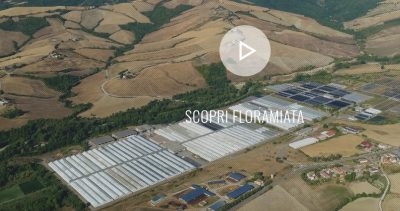 Enel to supply geothermal heat to large-scale greenhouse operations in Tuscany