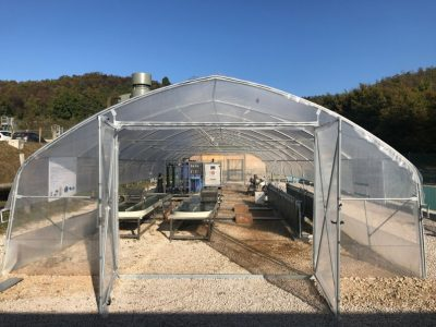 Algae cultivation in geothermal energy heated greenhouse, Italy
