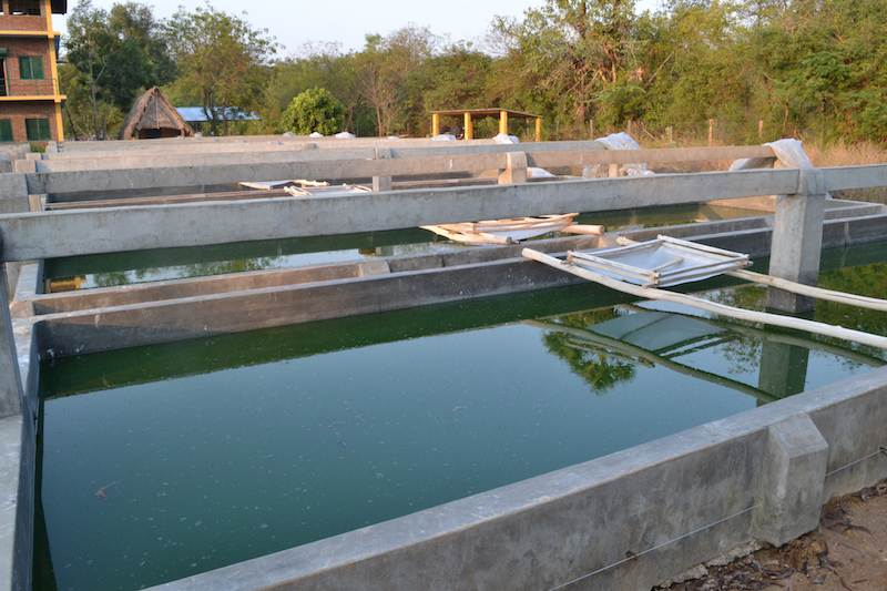 Project on production of algae from geothermal hotsprings started in Yalova,Turkey