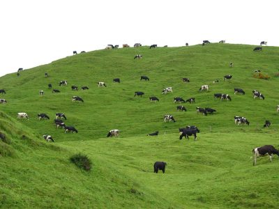 Japanese food company investing in geothermal dairy processing plant in New Zealand