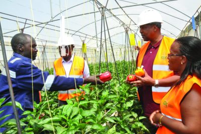 GDC setting emphasis on utilising geothermal energy to boost food security in Kenya