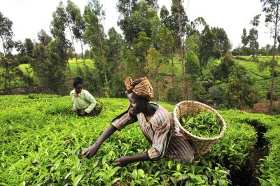 Kenyan farmers set to enjoy geothermal in their crop production