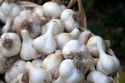 Direct Use – Dehydration of onion and garlic in Nevada