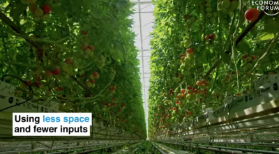 Dutch tomatoes and sustainable agriculture with geothermal as key ingredient