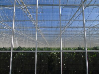 Continued development of geothermal greenhouses in the Netherlands