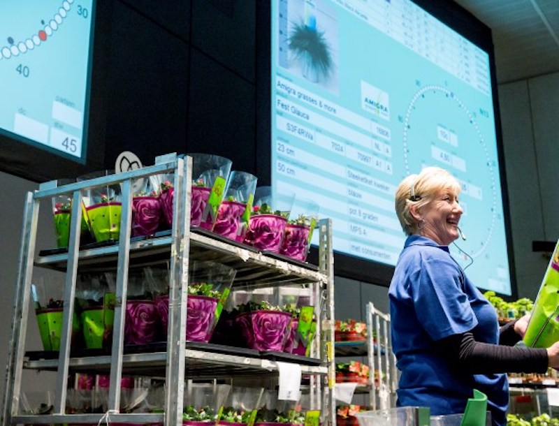 Geothermal heat to help largest flower auction firm on sustainability efforts