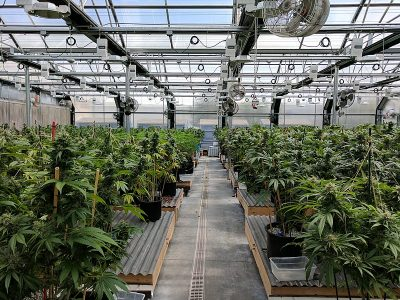 Geothermal energy in the context of the ever growing cannabis market