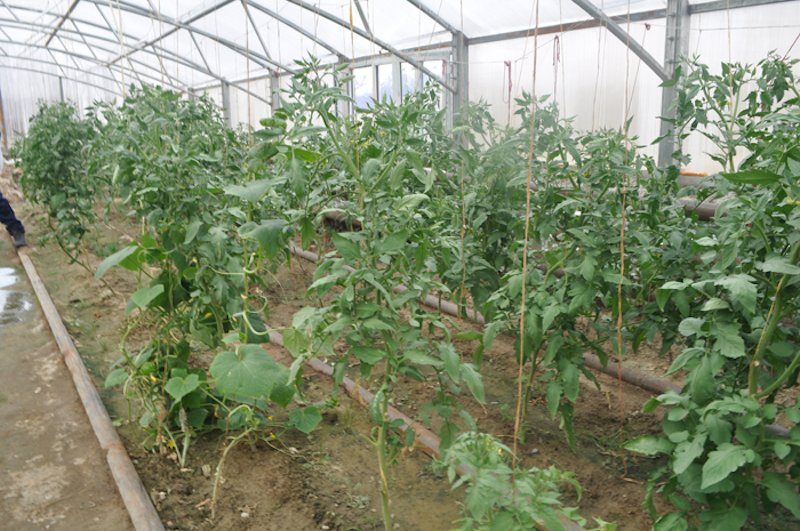 Uses  of geothermal energy in food and agriculture – FAO Report