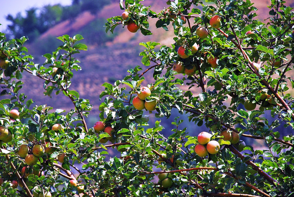 Exploring geothermal for cooling apples in northern India