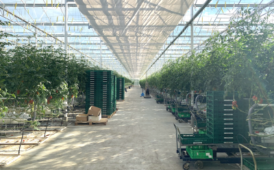 Geothermal great advantage for Hungary's horticulture sector